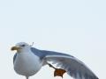 Oiseau à Rome
