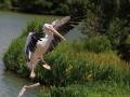 Pélican au Parc des oiseaux à Villars les Dombes