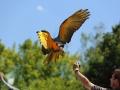 Perroquet au Parc des oiseaux à Villars les Dombes